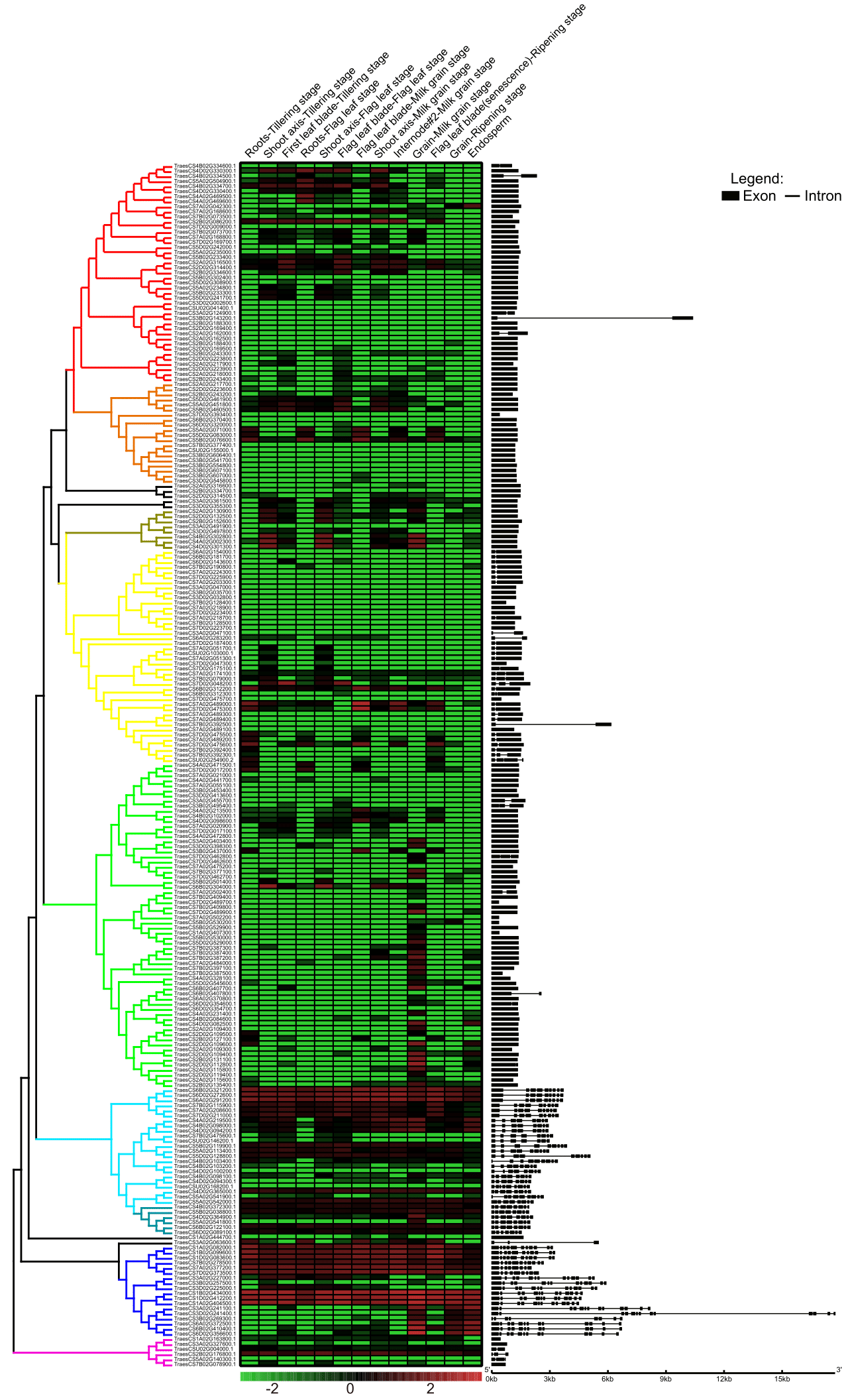Genomic analyses of wheat Aspartic proteinase gene family provide novel insights for wheat stress responses