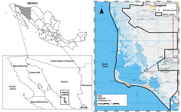 Trace element concentrations in sediments and water from Bahia de Lobos, Sonora, Mexico.
