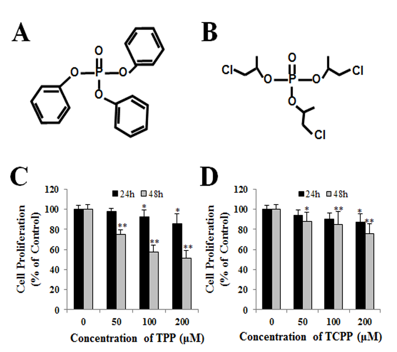 Triphenyl phosphate (TPP) and tris (2-chloroisopropyl) phosphate (TCPP) induced apoptosis and cell cycle arrest in HepG2 cells