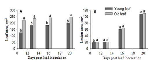 Interactive effects of leaf age and inoculum concentration on downy mildew of cucumber plants and the implication of nutrients.