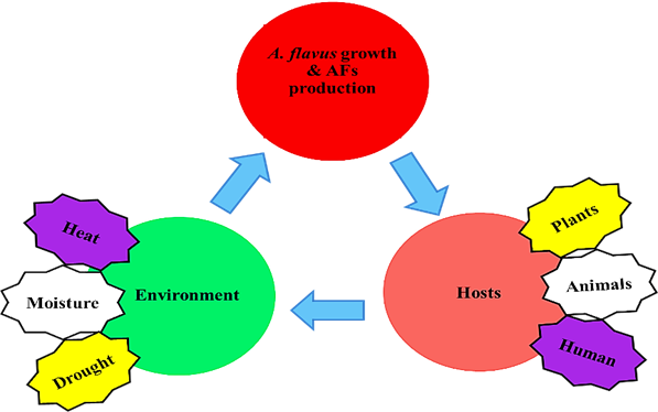Environment, A. flavus and Host interactions triangle